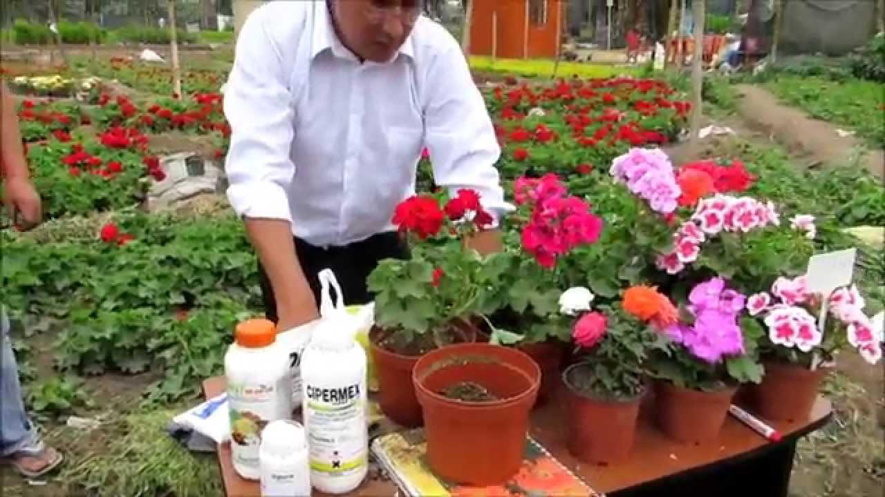 vivero natuflor peru youtube On viveros de plantas en lima