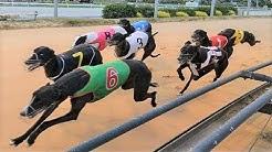Greyhounds - Dog Racing - Track race