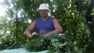 видео Как заготовить березовые веники для бани