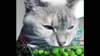 Смешные видео с котами и кошечками Смотреть ВСЕМ Подборка приколов с котами и кошками