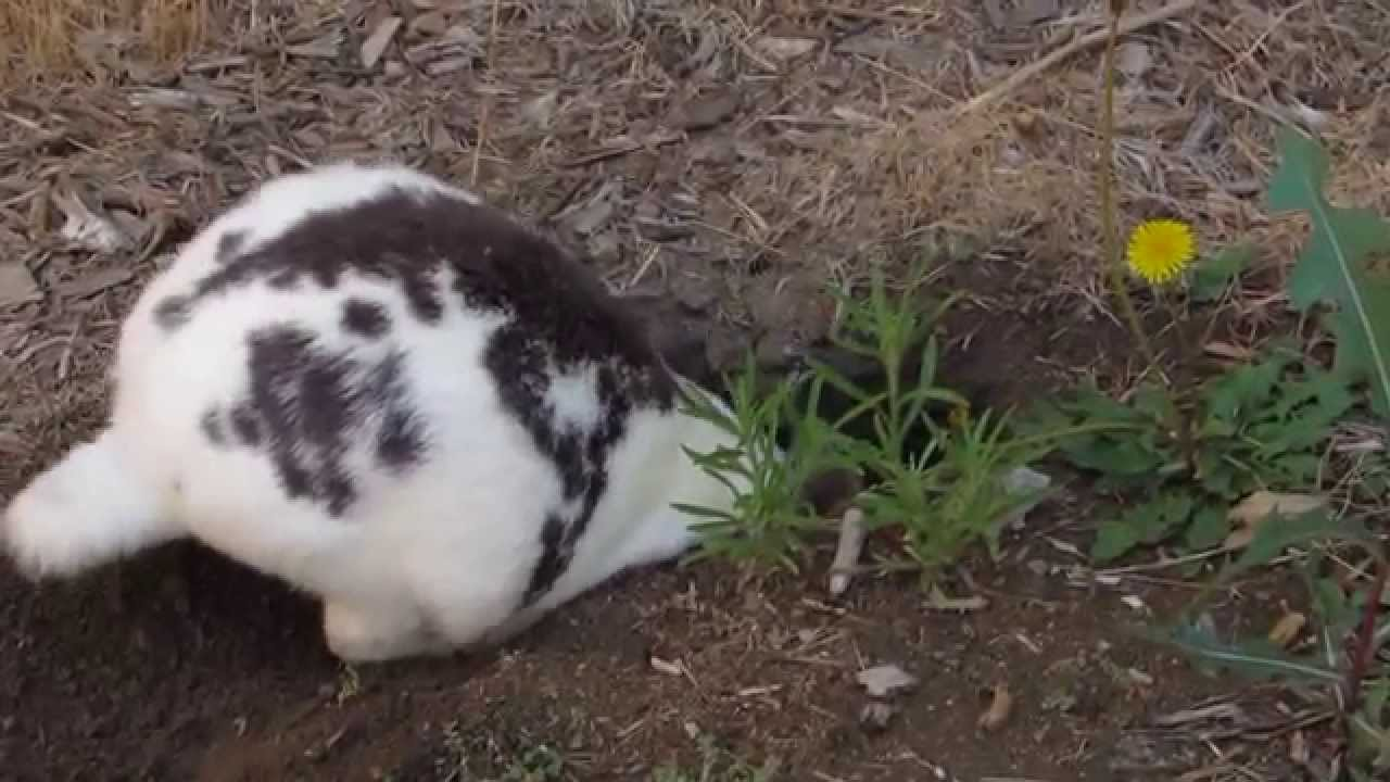 Do Rabbits Love To Dig Youtube