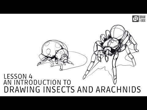 Lesson 4: An Introduction to Drawing Insects and Arachnids