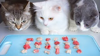 Raw or boiled meat? What do munchkin cats like?
