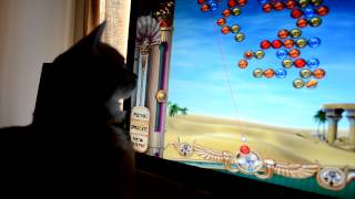 Cute Cat Plays Phlinx