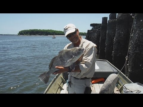 Jiggin Jerry Inshore Fishing In Charleston County, SC In The Middle Of June 2015