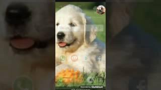En iyi ekran video /görüntü kaydetme programı (android)