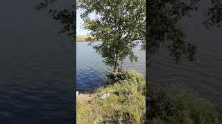 Рыбалка, пруд 2018 г