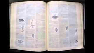 Aiguillon | Dictionnaire français audio