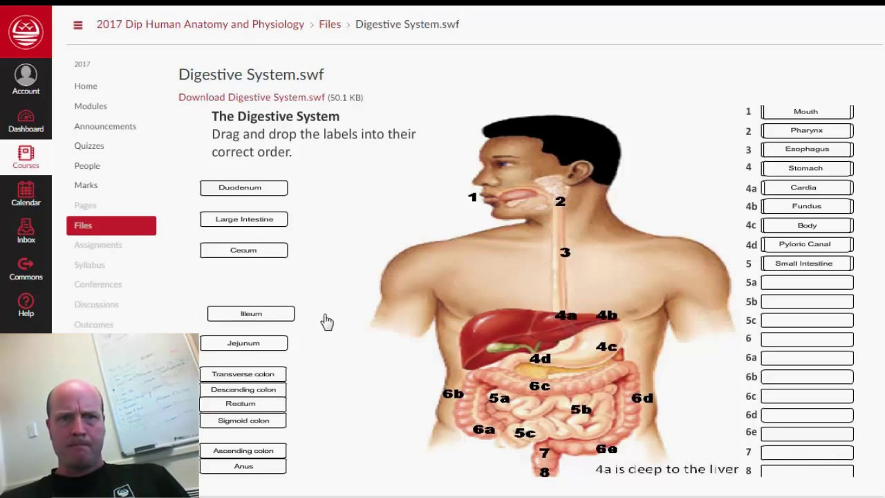 Digestive system labelling - YouTube