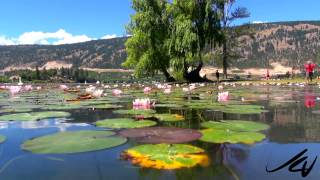 Kaloya Regional Park. Oyama, Lake Country, BC - 'Water lily Garden' -  YouTube