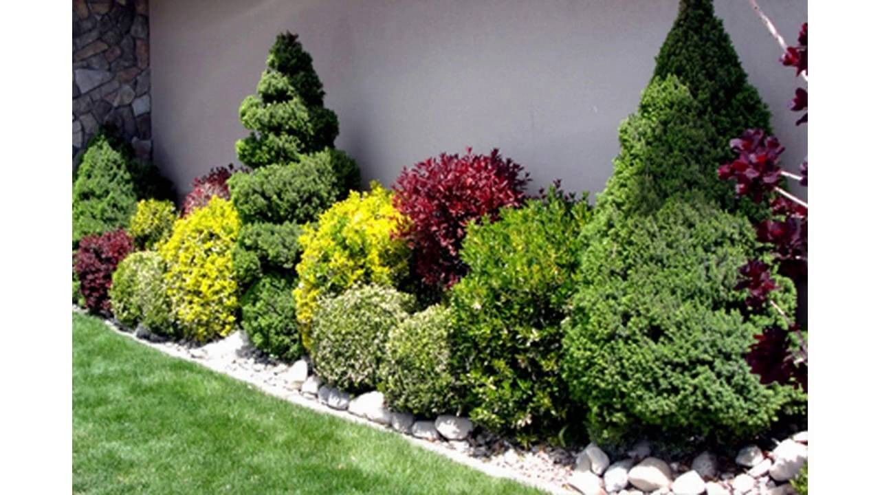 small garden bushes