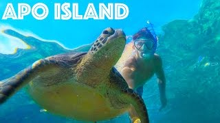 SEA TURTLE ISLAND! Apo Island, Philippines