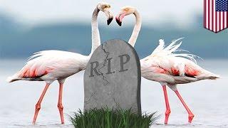 Studenci wykradają flaminga z zoo. Zwierzę ginie.