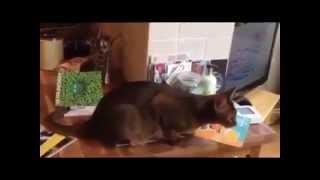 смотреть смешные видео про кошек