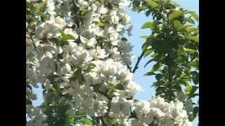 Борьба с вредителями в саду(Как избавиться от шелкопряда непарного и других вредителей сада? Как защитить растения не прибегая к помощ..., 2012-08-26T13:35:57.000Z)