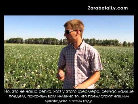Фермерское хозяйство. Выращивание лука.