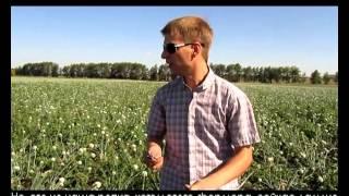 видео Выращивание лука