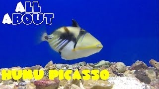 Video All About The Humu Picasso Triggerfish download MP3, 3GP, MP4, WEBM, AVI, FLV Januari 2018