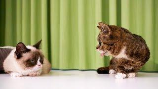 farewell-grumpy-cat