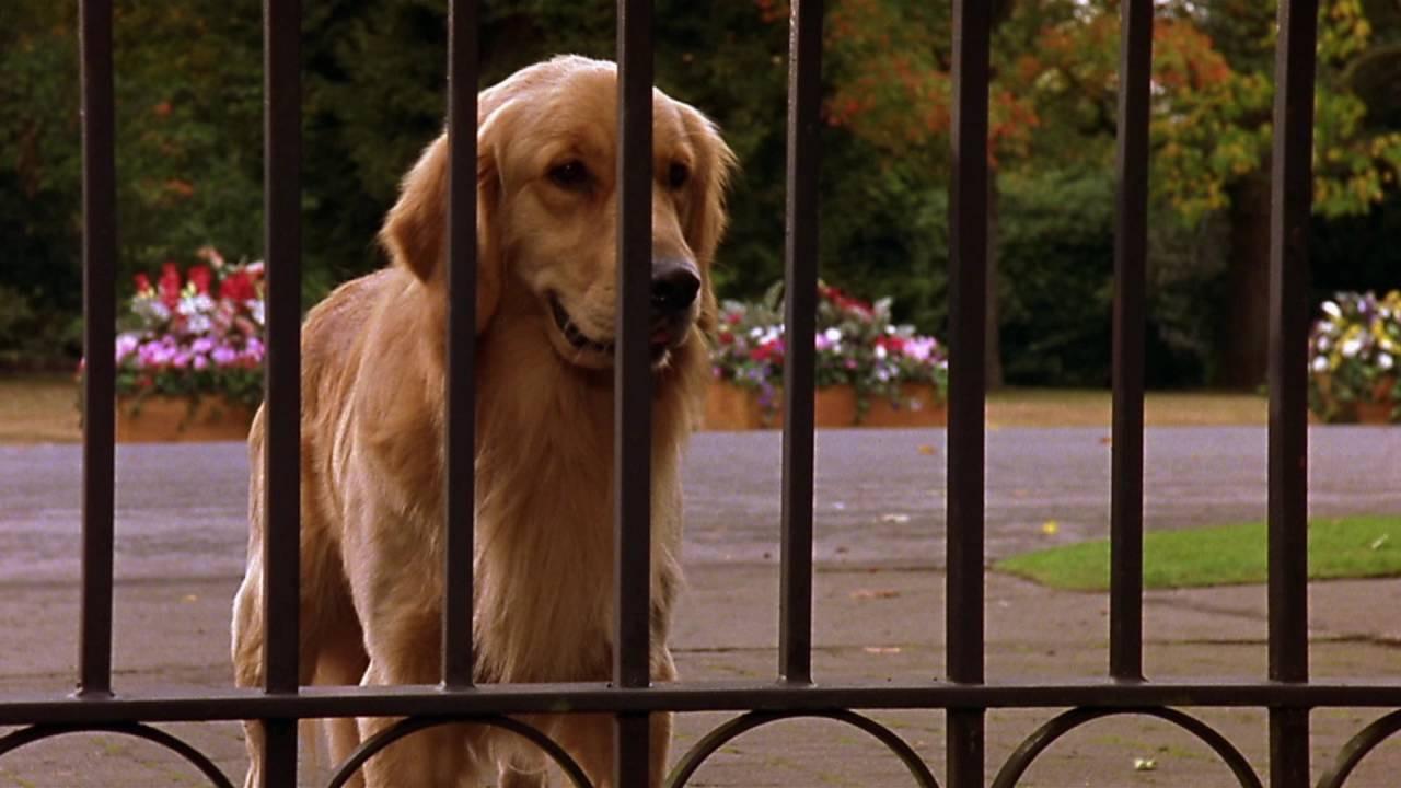 Karakter Old Blue di film Air Bud