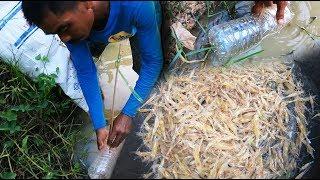 ขวดดักกุ้งง่ายๆได้กุ้งเยอะ ไซดักกุ้งทำด้วยขวดน้ำไม่ต้องลงทุนมาก