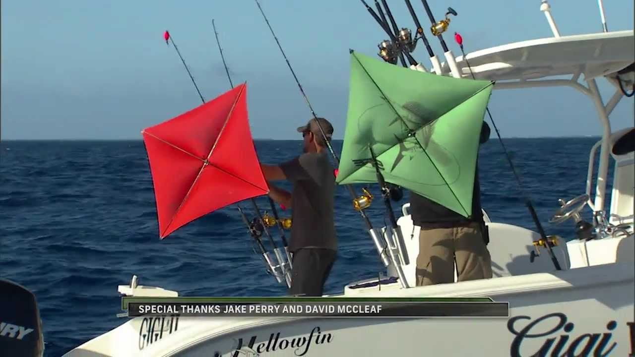 Into the blue kite fishing for sailfish off marathon for Into the blue fishing