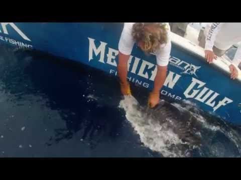 Mexican gulf fishing company offshore trip june 2016 youtube for Mexican gulf fishing company