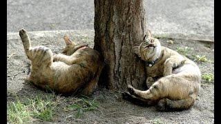 Кошка и корень валерианы.