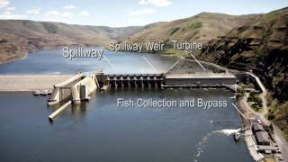 Columbia Snake River Fish Passage