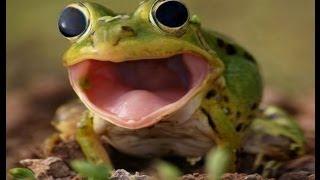 Эффект бешеной лягушки (фотошоп)