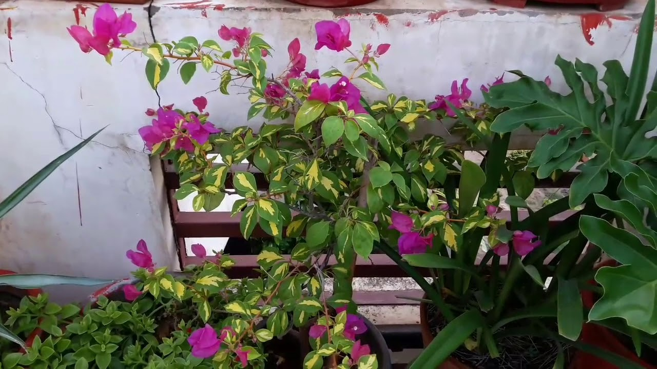 Common House Plants And Their Names Fun Gardening 8 Sep 2017