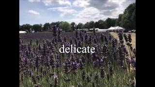 delicate - taylor swift - cover (annr)