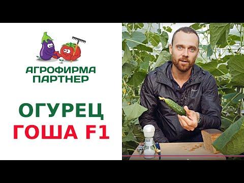 ПАРТЕНОКАРПИЧЕСКИЙ ОГУРЕЦ ГОША F1
