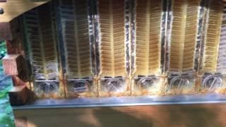 Flow hive honey harvest summer 2017