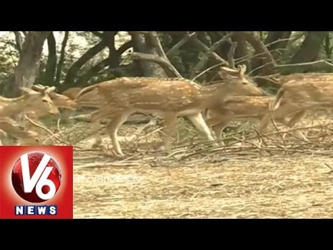 Animals Been Neglected By Authorities In Warangal Mini Zoo Park