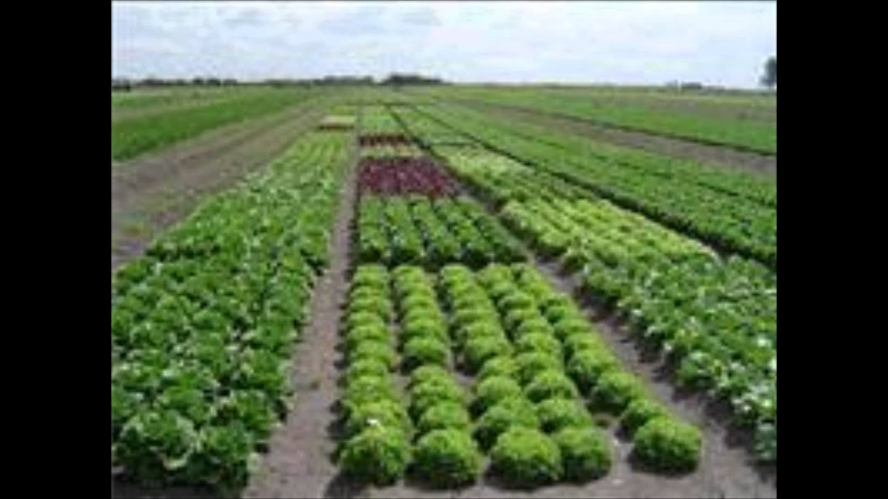 Modo asiatico de produccion cp youtube for Rotacion cultivos agricultura ecologica