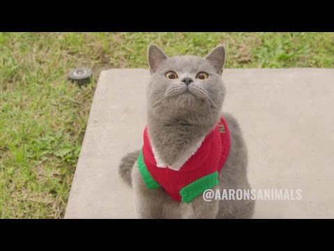 Christmas Carol Cats - Aarons Animals
