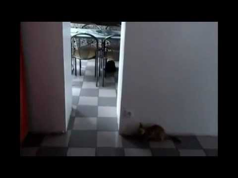 Failed Cat Sneak Attack