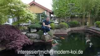 Modern Koi Blog #167 - Koi aus Super-Koi-Teich abzugeben