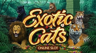 Exotic Cats Online Slot Promo