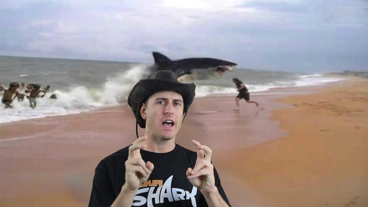 Shark Attacks Of Jersey Shore