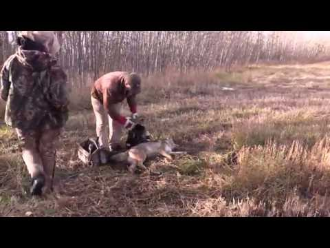 Trapping Inc 2016 Episode 2 You Tube