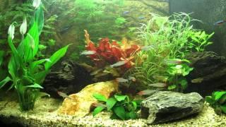 Tv Aquarium Hd Hq