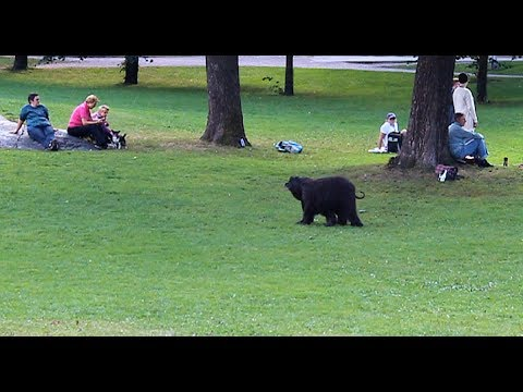 Must be legal to keep bears, as pets :O (Helsinki, Finland)
