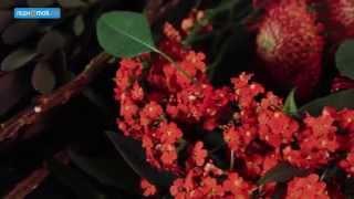 видео Какие цветы дарят мужчинам на день рождения?