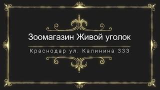 видео Купить комнатных животных и птицу в Челябинске