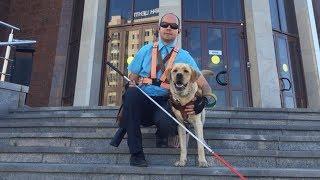 Слепого с собакой выгнали из автобуса