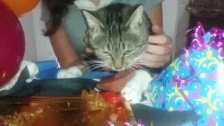 Un gato divertido en su cumpleaños.