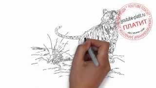 Как нарисовать амурского тигра карандашом поэтапно(Как нарисовать картинку поэтапно карандашом за короткий промежуток времени. Видео рассказывает о том,..., 2014-07-06T06:46:35.000Z)