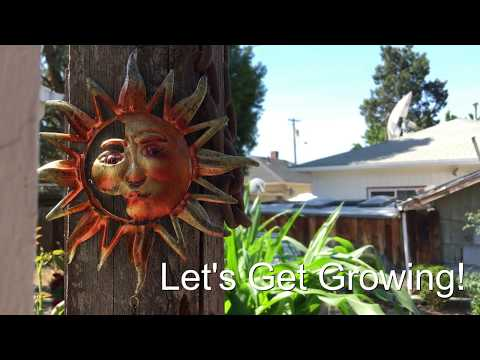 Episode 28 - the Urban Garden 2017 Summer garden tour Part 1